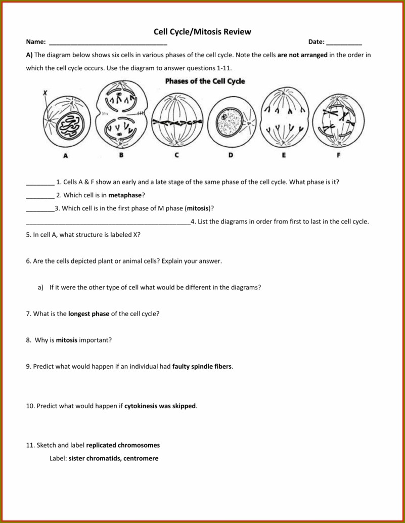 Cell Cycle And Mitosis Review Worksheet Answer Key