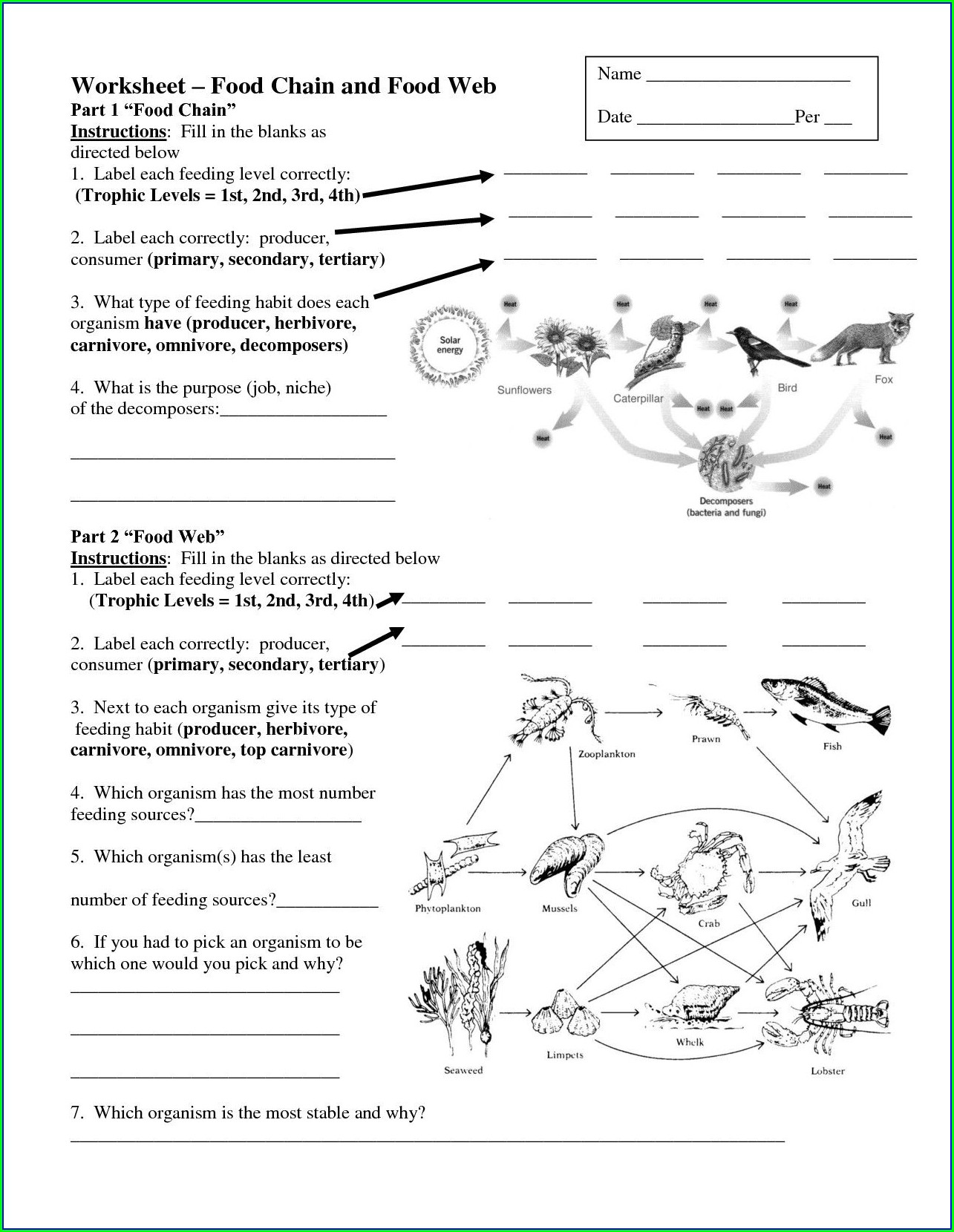 Food Chain Worksheet For Grade 4