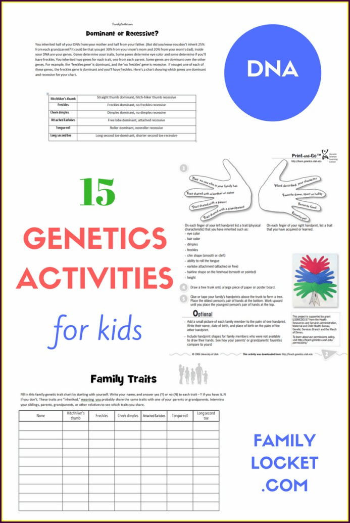 7th Grade Dna Worksheet Middle School