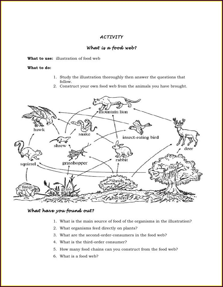 7th Grade Food Web Worksheet Middle School