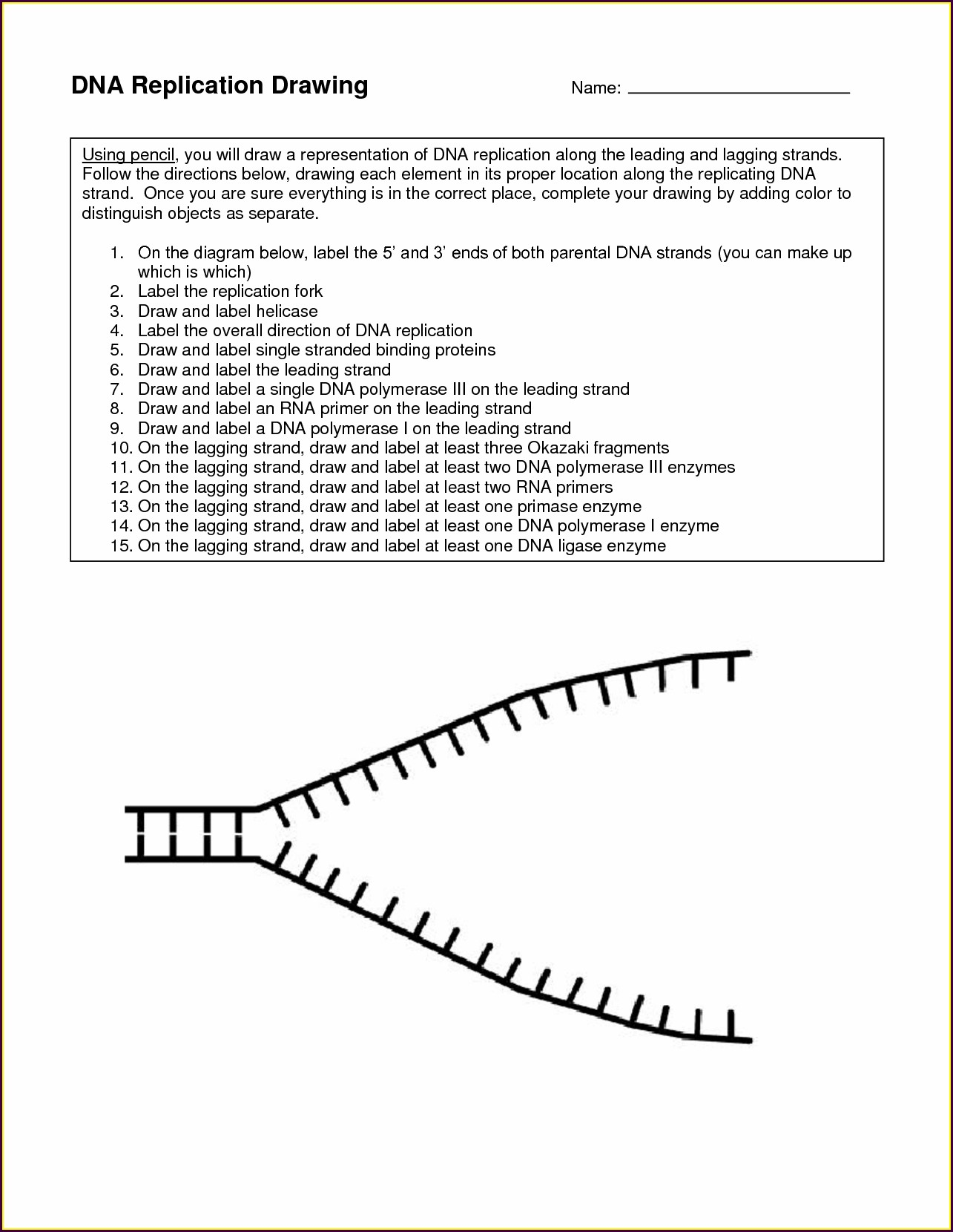 Dna Worksheet Middle School Pdf