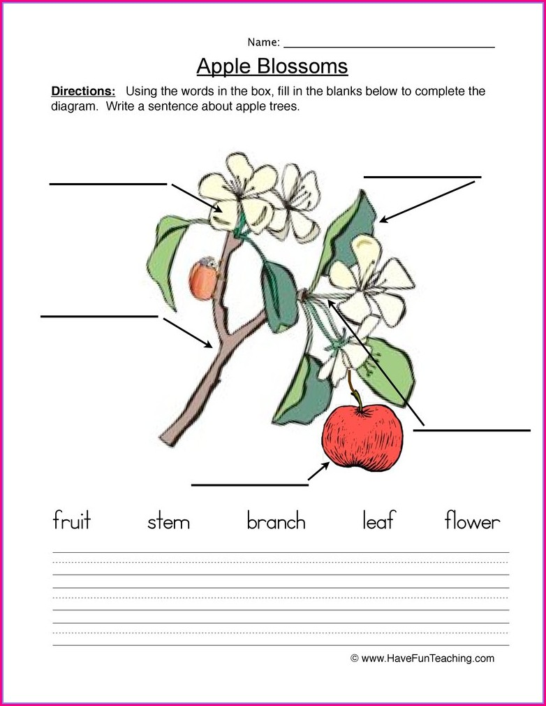 First Grade Math Worksheets On Fractions