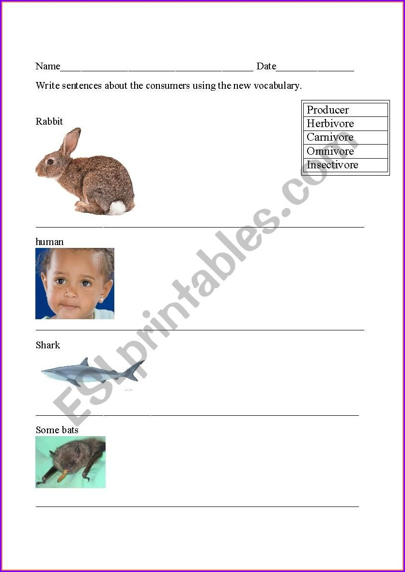 Food Chain Vocabulary Worksheet