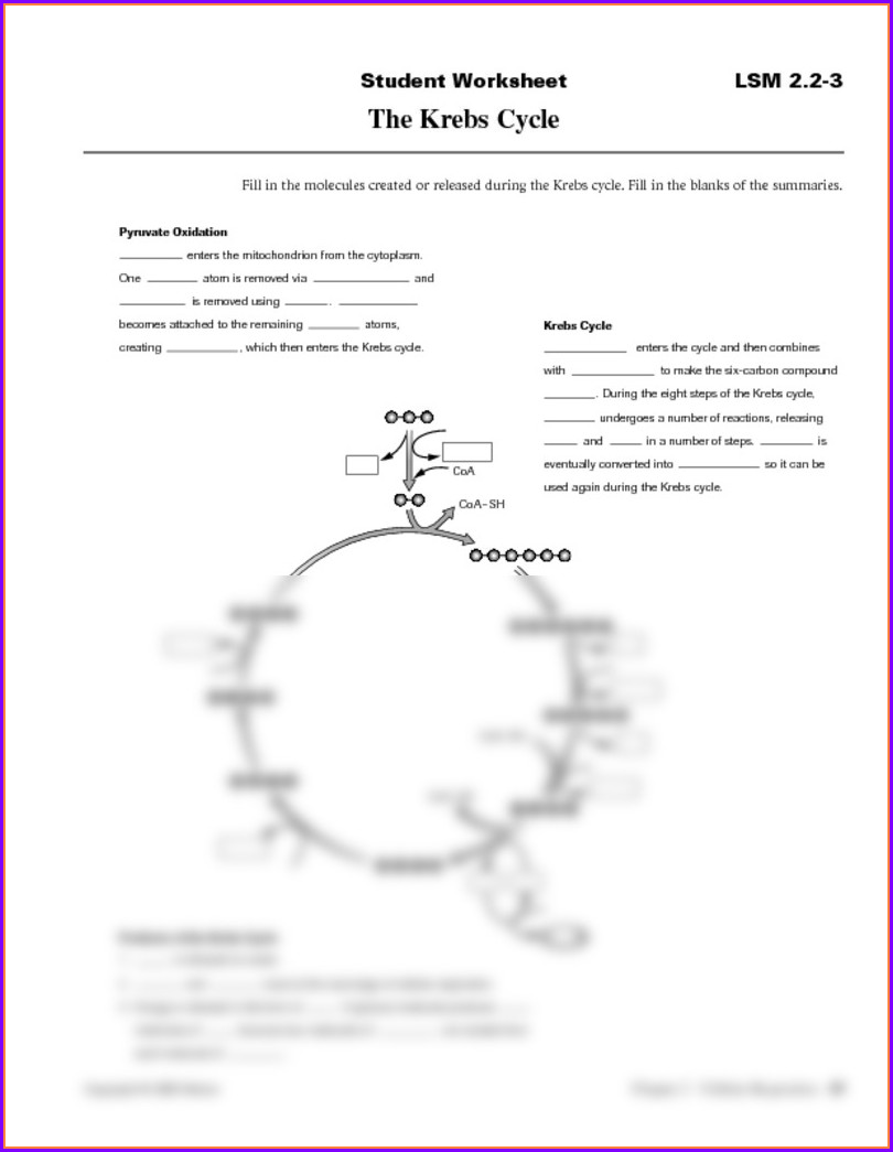 Krebs Cycle Worksheet Pdf