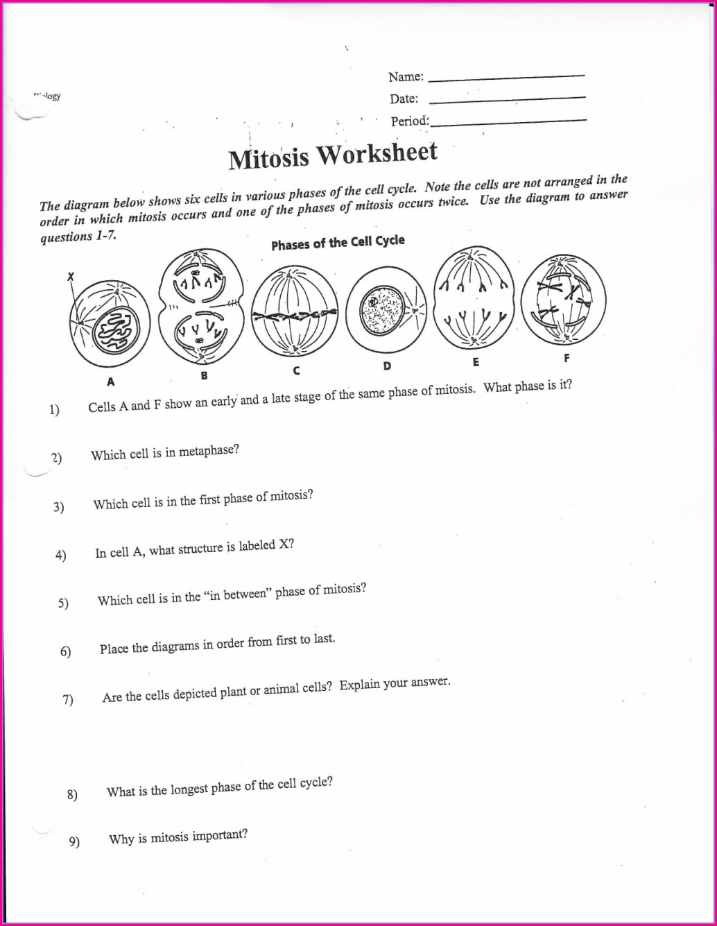 Middle School Mitosis Worksheet Answers Key