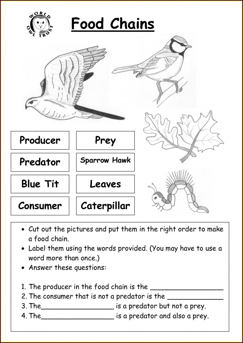 Worksheet On Food Chain For Grade 4