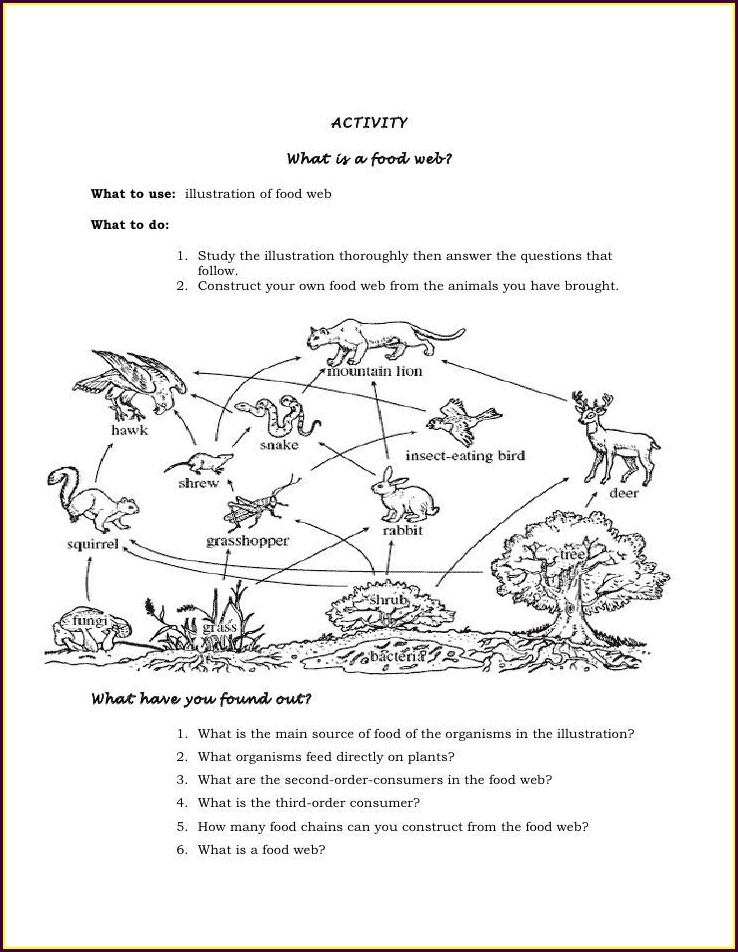Worksheet On Food Chain